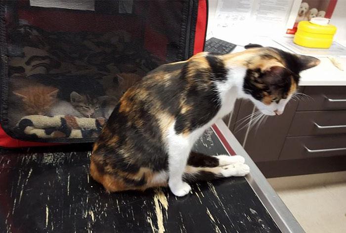 Esta gata paralítica se arrastró hasta donde dejó a sus crías después de que un vecino intentara matarla