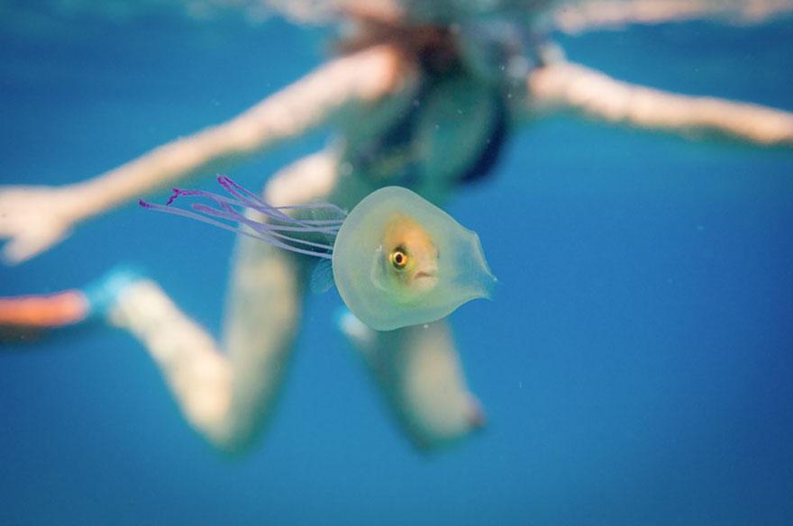 pez-atrapado-interior-medusa-tim-samuel (2)