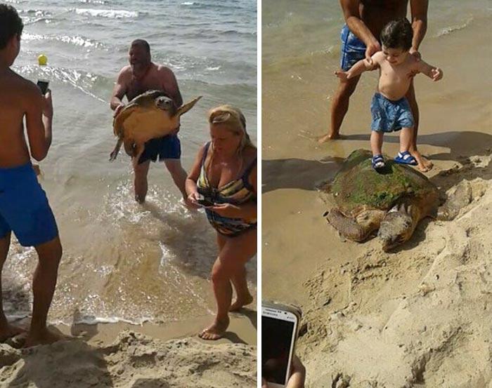 Esta tortuga marina fue sacada del mar para hacerse selfies con ella hasta que fue rescatada