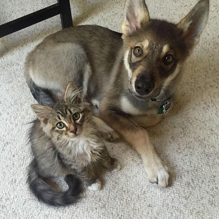 amistad-animal-perro-raven-gato-woodhouse (3)
