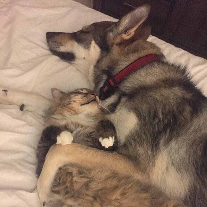 amistad-animal-perro-raven-gato-woodhouse (4)