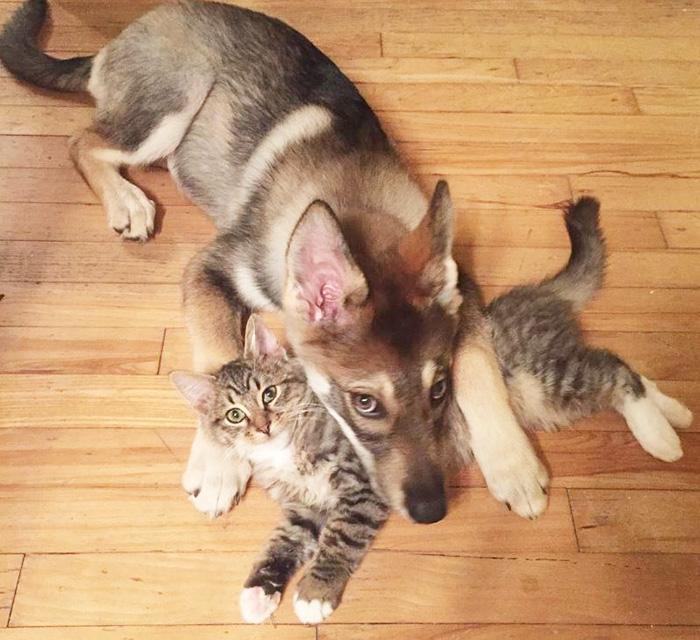 amistad-animal-perro-raven-gato-woodhouse (7)
