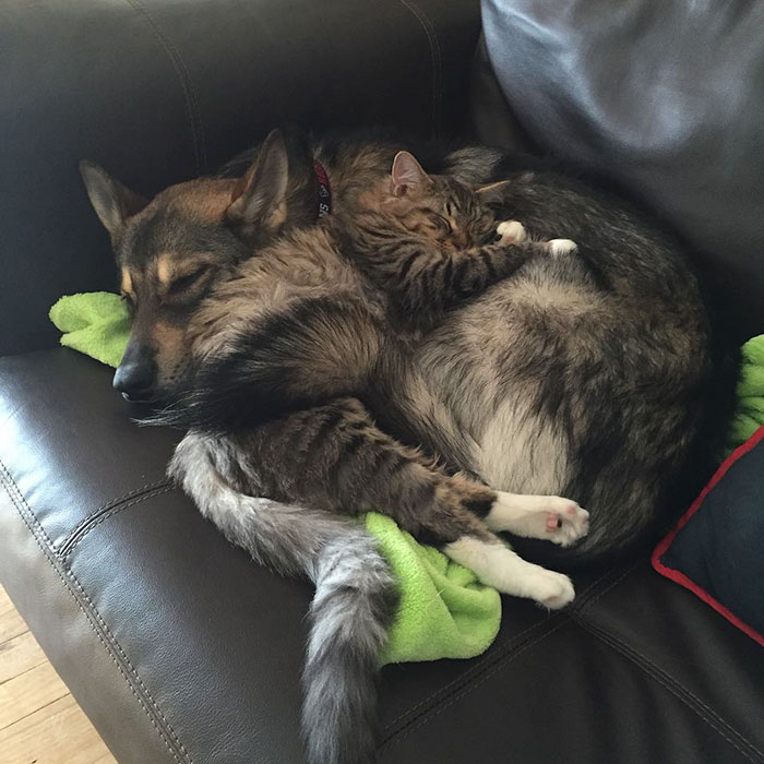 amistad-animal-perro-raven-gato-woodhouse (8)