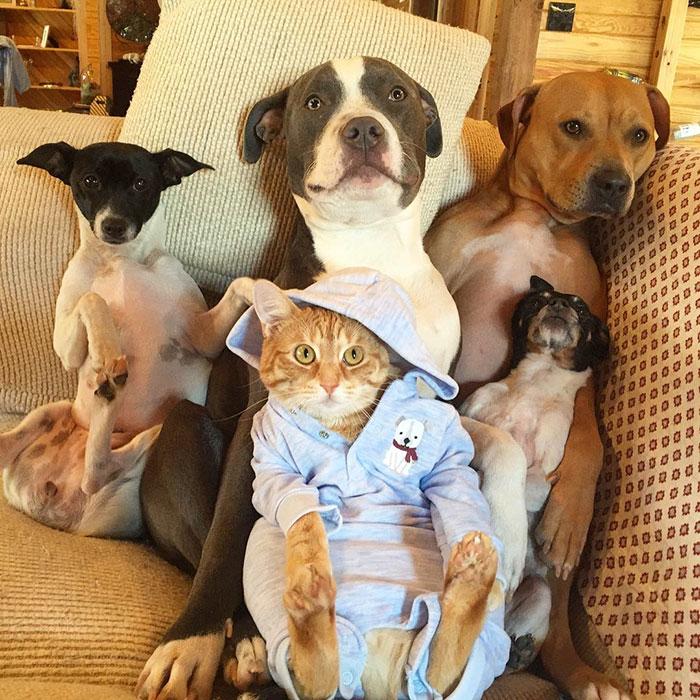 familia-7-animales-rescatados-amistad (10)