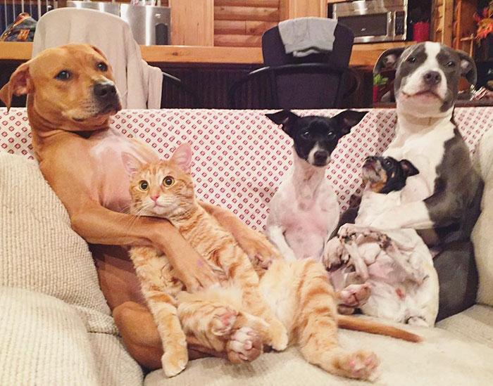 familia-7-animales-rescatados-amistad (11)