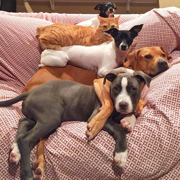 familia-7-animales-rescatados-amistad (13)