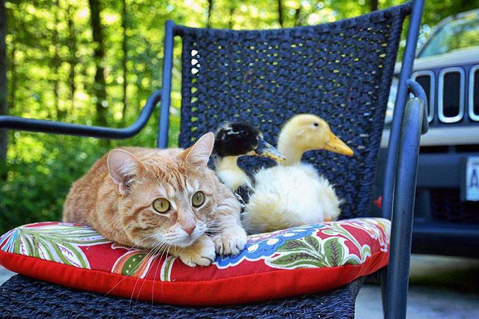familia-7-animales-rescatados-amistad (14)