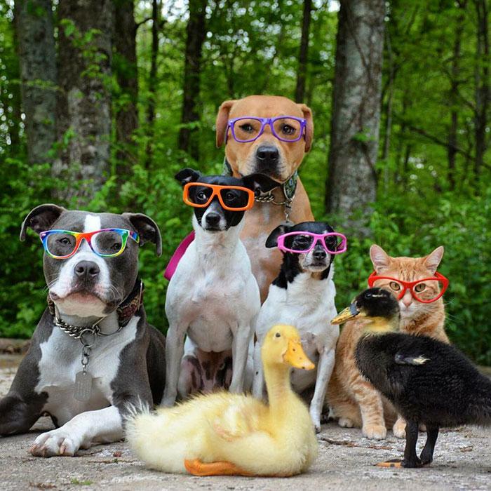 familia-7-animales-rescatados-amistad (3)