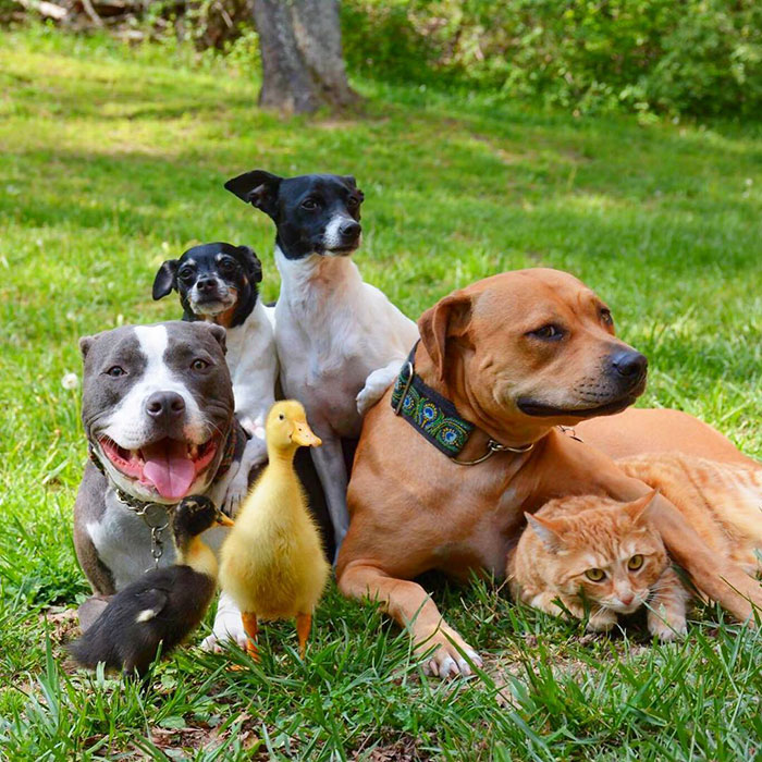 familia-7-animales-rescatados-amistad (4)