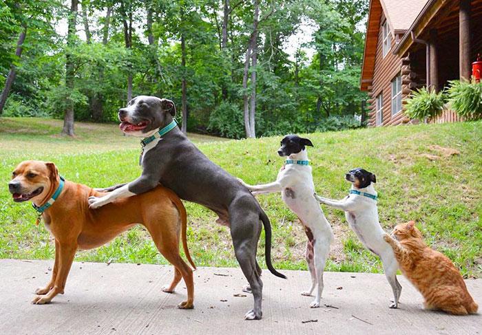 familia-7-animales-rescatados-amistad (5)
