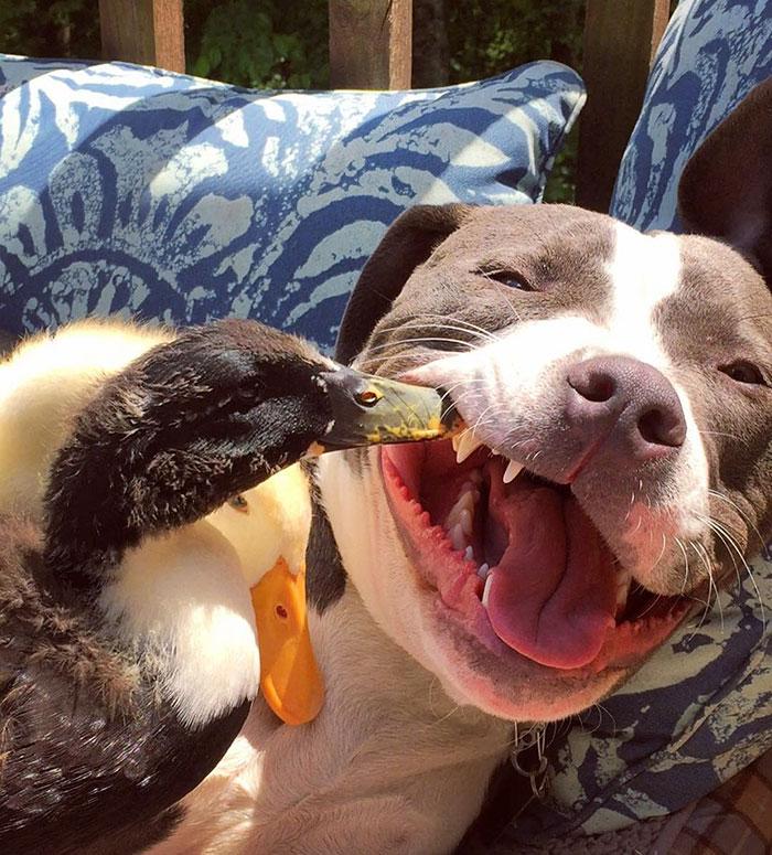 familia-7-animales-rescatados-amistad (7)