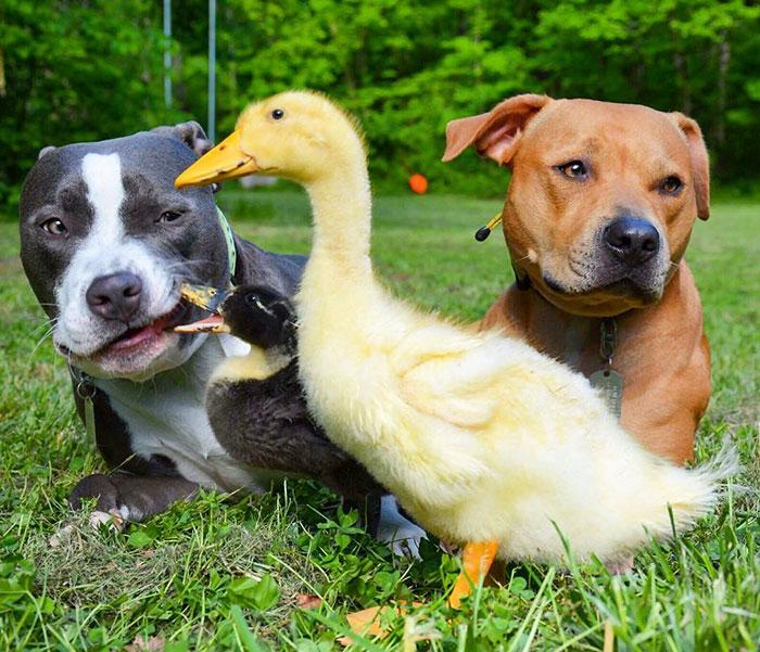 familia-7-animales-rescatados-amistad (8)