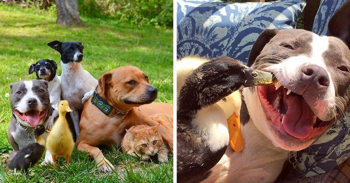 Esta pareja rescató 7 animales y así es como viven ahora