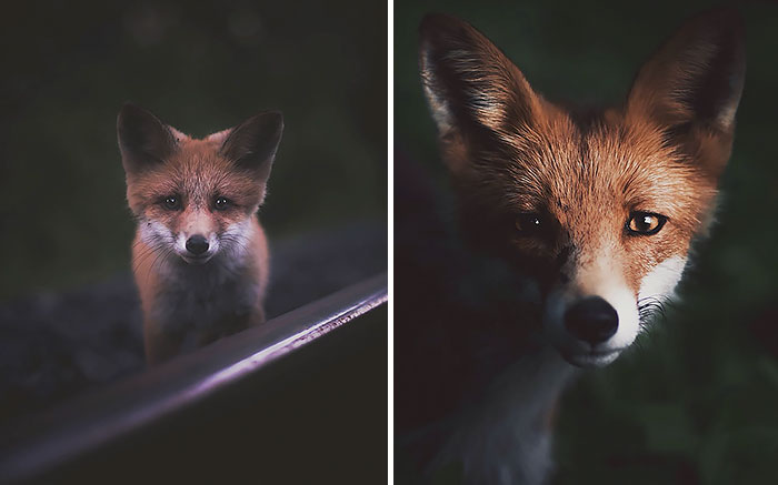 Este fotógrafo capta el alma del bosque con sus fotos de animales increíblemente intimas