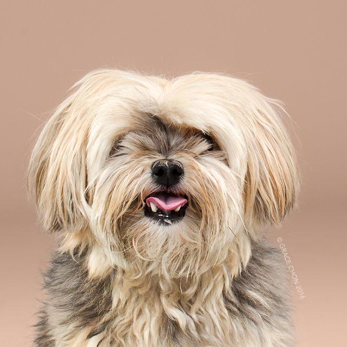 fotos-perros-antes-despues-corte-pelo-grace-chon (14)