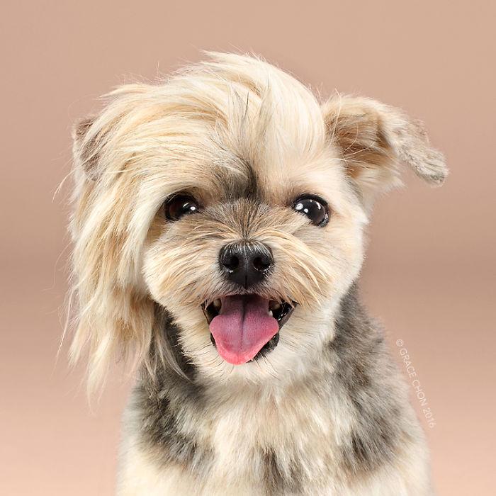 fotos-perros-antes-despues-corte-pelo-grace-chon (15)