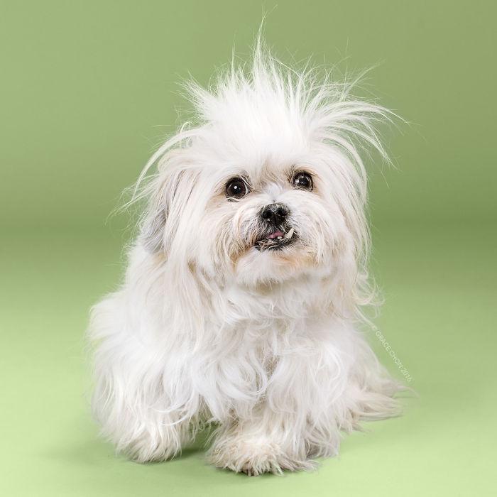 fotos-perros-antes-despues-corte-pelo-grace-chon (16)