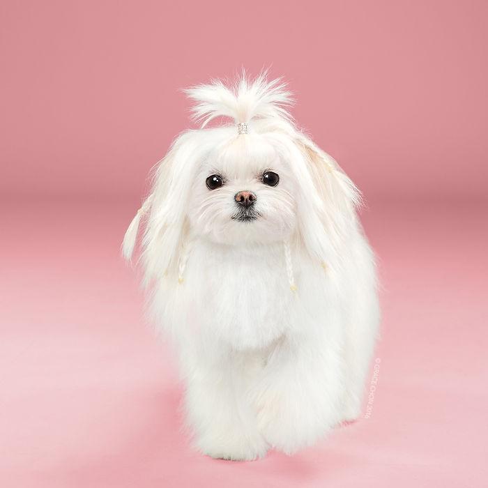 fotos-perros-antes-despues-corte-pelo-grace-chon (2)