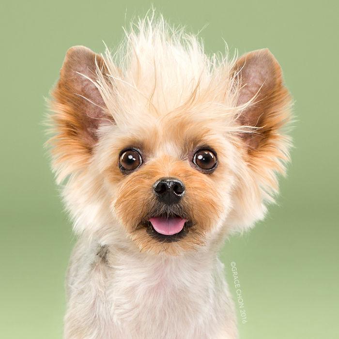 fotos-perros-antes-despues-corte-pelo-grace-chon (6)