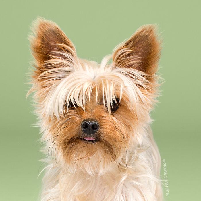 fotos-perros-antes-despues-corte-pelo-grace-chon (7)