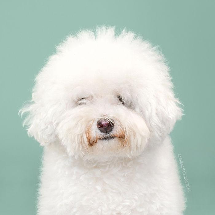 fotos-perros-antes-despues-corte-pelo-grace-chon (8)
