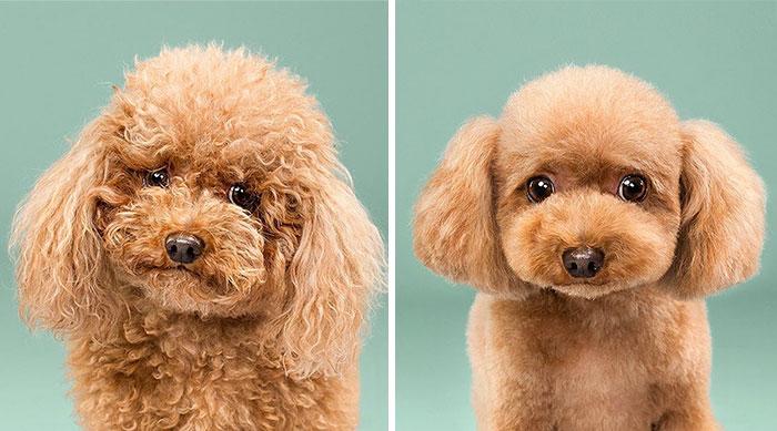 Resultado de imagen de corte de pelo estilo cachorro