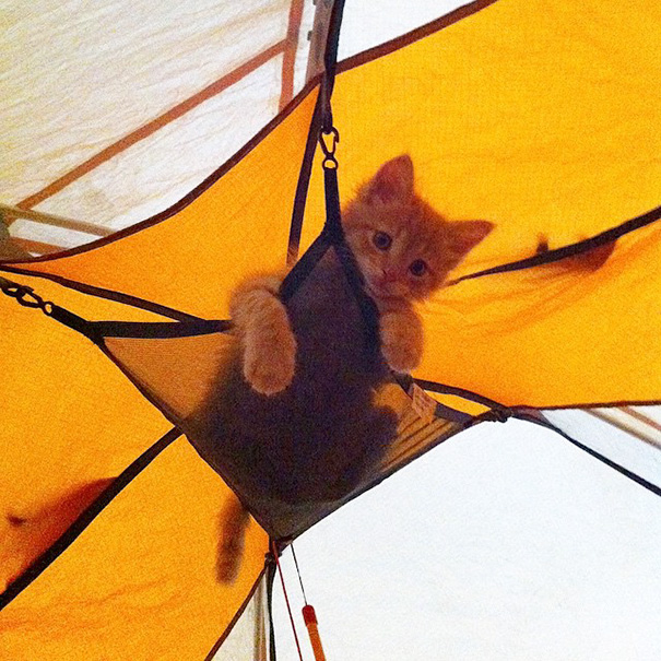 instagram-acampar-con-gatos-ryan-carter (15)