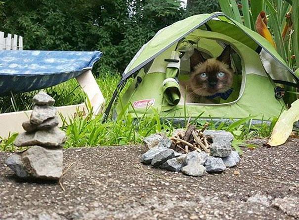 instagram-acampar-con-gatos-ryan-carter (2)