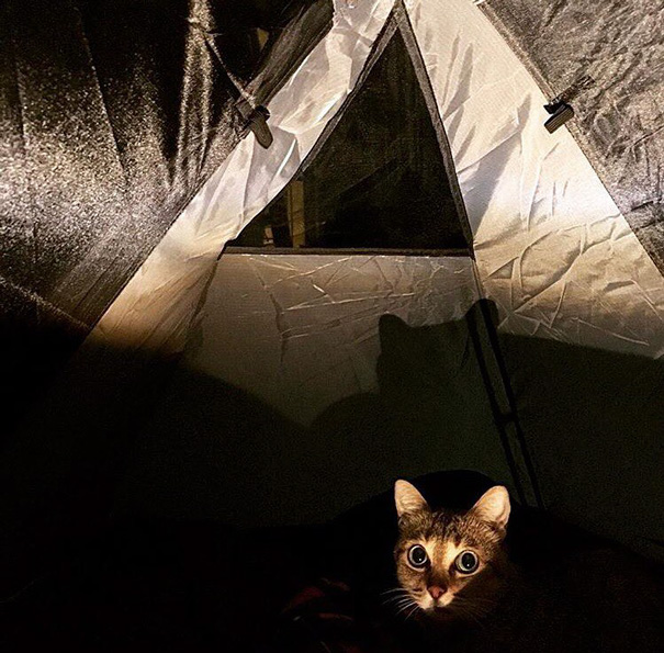 instagram-acampar-con-gatos-ryan-carter (5)