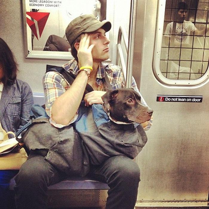 perros-grandes-bolsos-metro-nueva-york (1)
