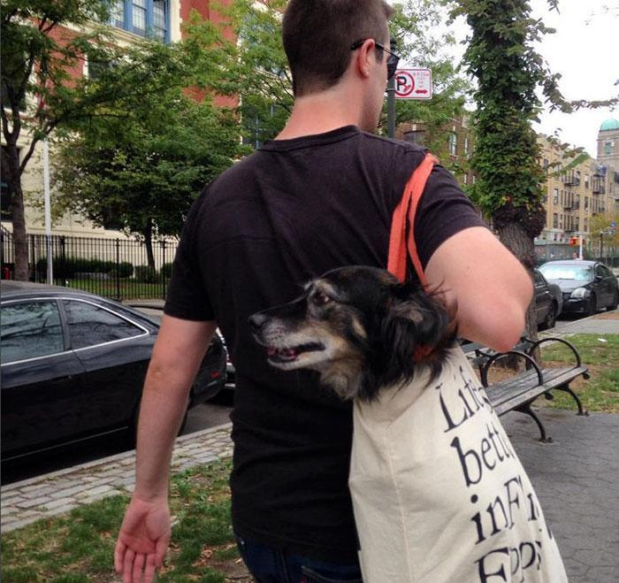 perros-grandes-bolsos-metro-nueva-york (3)