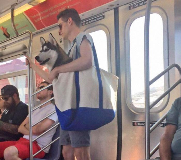 En el metro de Nueva York no se permiten perros salvo que vayan en un transporte… así que ocurrió esto