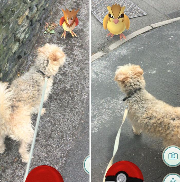 refugio-animal-paseo-perros-pokemon-go (3)