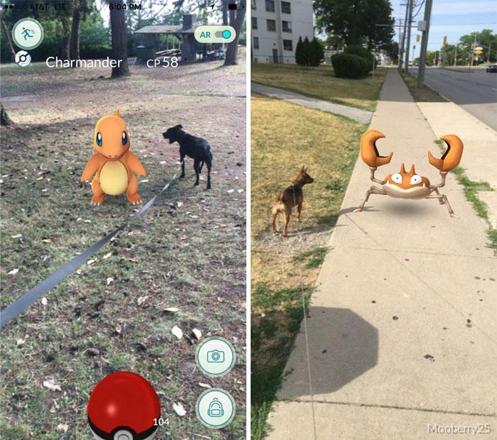 refugio-animal-paseo-perros-pokemon-go (5)