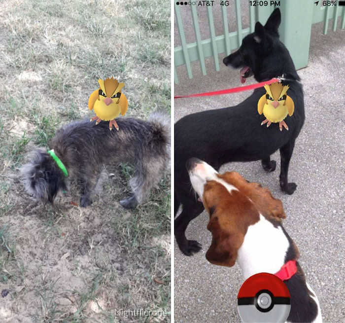 refugio-animal-paseo-perros-pokemon-go (6)