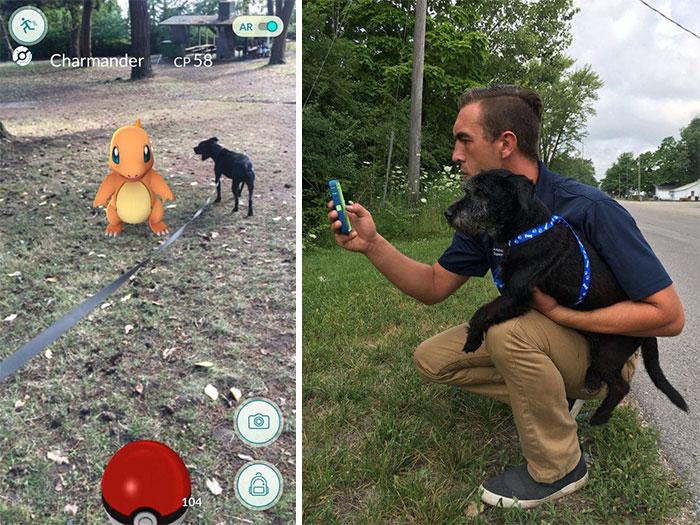 Cuando este refugio animal pidió a jugadores de pokemon que pasearan a sus perros, no se esperaban esto