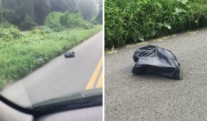 Esta mujer vio una bolsa de basura moviéndose y detuvo su coche para salvarla