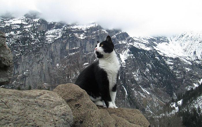 Este gato guió a un hombre perdido montaña abajo en Suiza