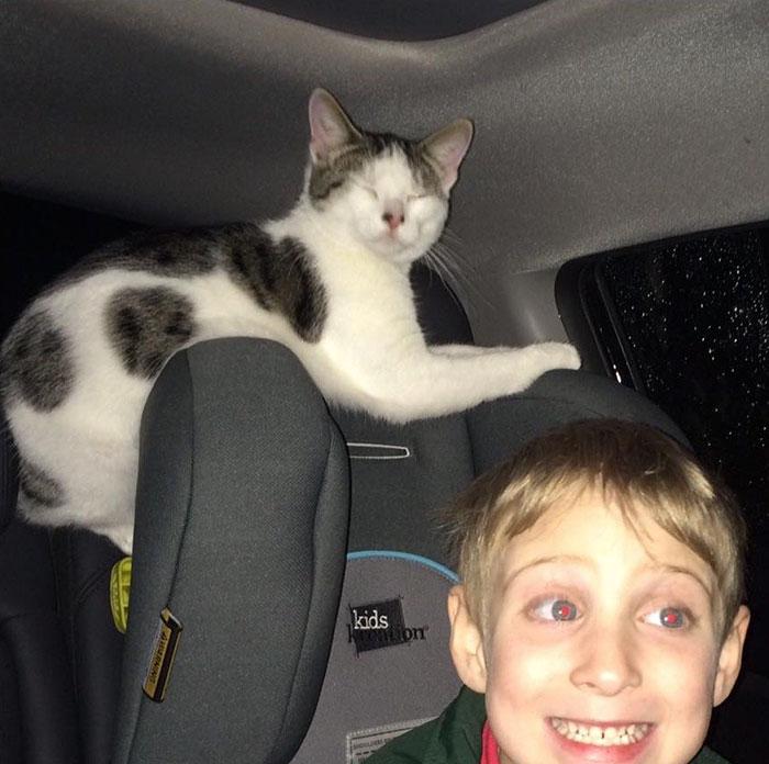 Este gato salvado horas antes de ser sacrificado no dejó de agradecérselo a su rescatadora mientras iban a casa