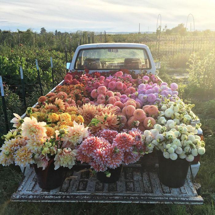 Este instagram demuestra que ser florista es el mejor trabajo del mundo