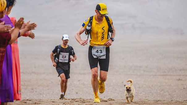perro-callejero-corredor-maraton-dion-leonard-gobi-china (7)