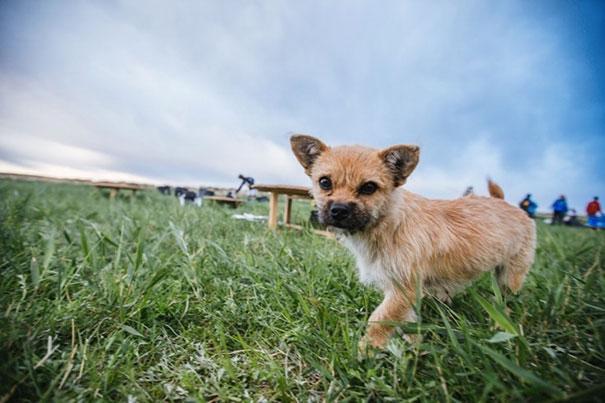 perro-callejero-corredor-maraton-dion-leonard-gobi-china (8)
