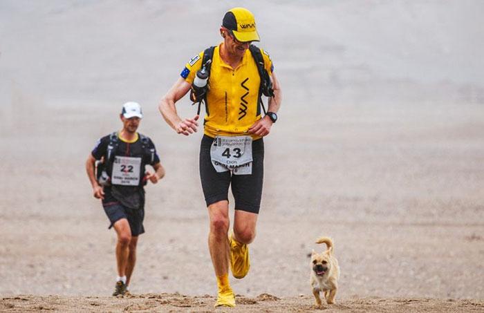 Este perro callejero se une a una carrera de 250 kms y la termina con un nuevo dueño