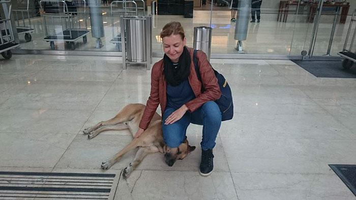 perro-rubio-espera-hotel-olivia-sievers-argentina (5)