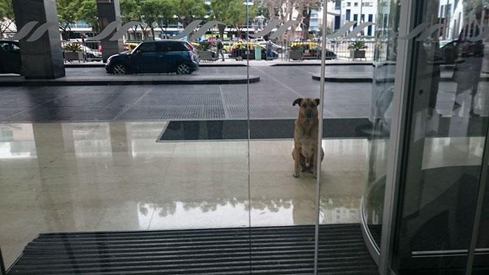 perro-rubio-espera-hotel-olivia-sievers-argentina (6)