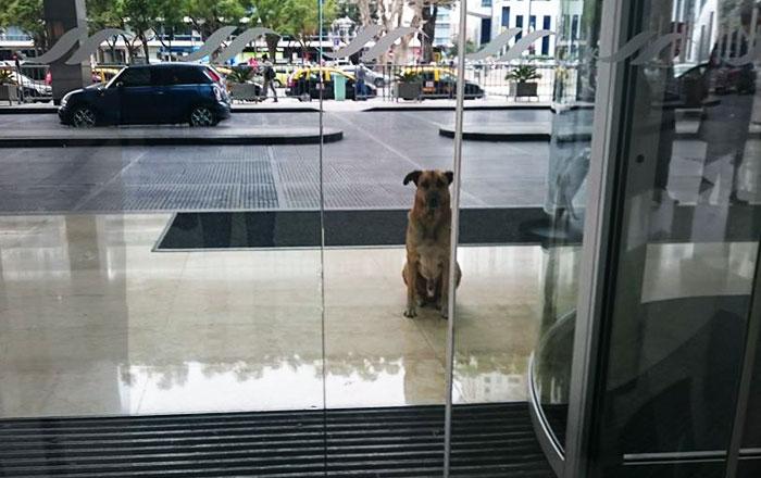 Esta azafata de vuelo adoptó a un perro callejero que siempre la esperaba fuera del hotel