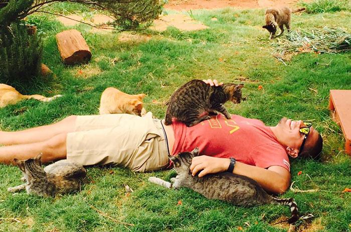 Viene gente de todo el mundo a este santuario gatuno en Hawai para mimar a sus 500 gatos