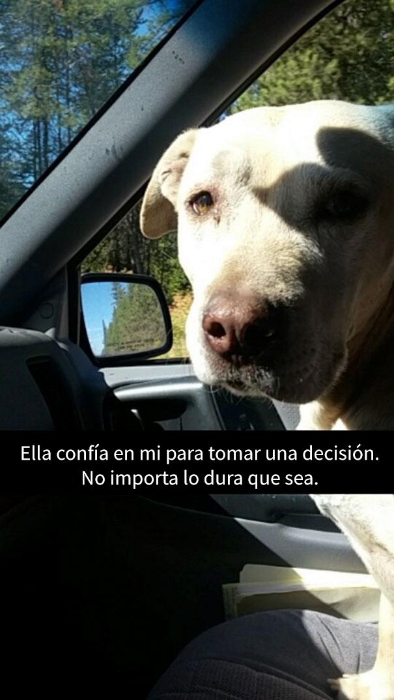 ultimo-dia-perro-snapchat-1