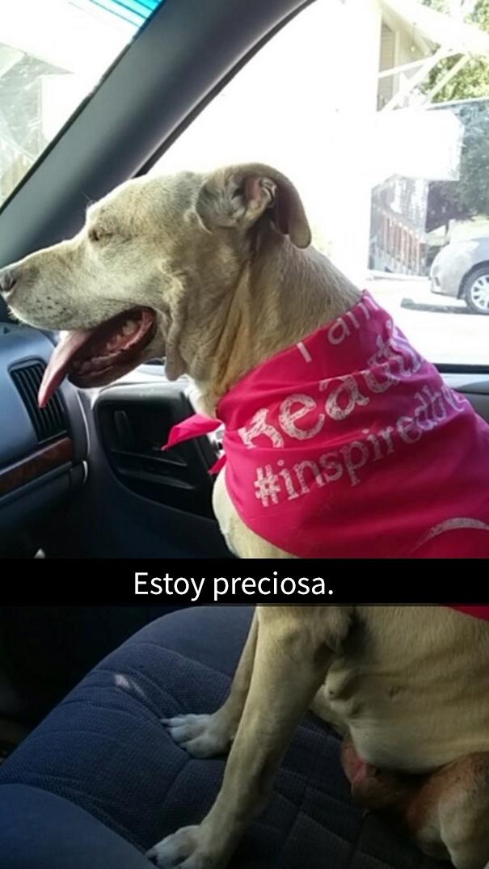 ultimo-dia-perro-snapchat-10