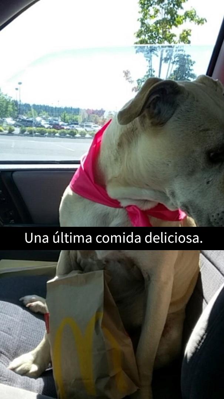 ultimo-dia-perro-snapchat-11